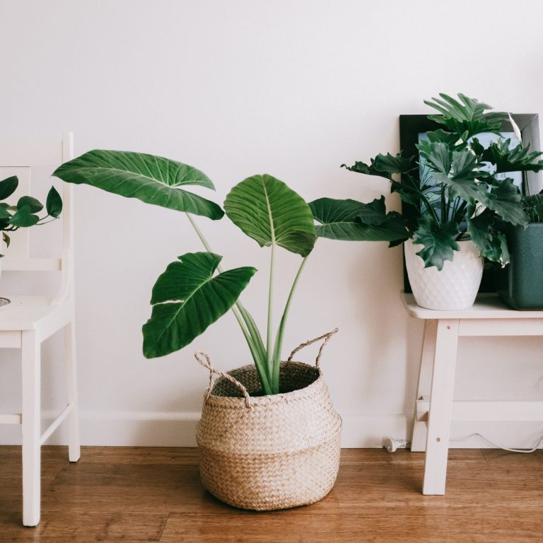 plants next to a white wall